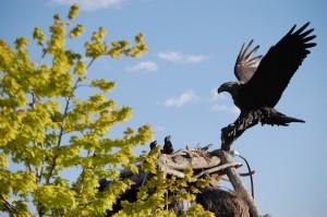 Image Result For Pocatello Idaho