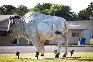 Large White Buffalo statue in Atoka, OK