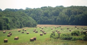 More bales of hay near Mountain Home, Missouri