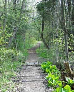 A walking trail at Trillium Woods Provincial Park