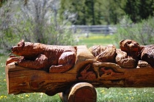 Relaxing Bears - Sawtooth City, Idaho