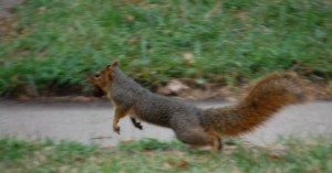 Scampering Squirrel