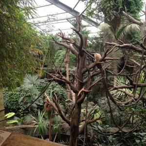 Monkeys in the Rainforest (photo by Marissa Noe)