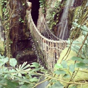 Rainforest bridge at Henry Doorly Zoo (photo by Marissa Noe)