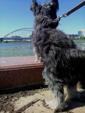 River Ishim Walkies - mid summer