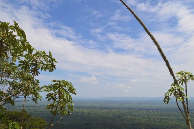 Jungle view from Turtle Mountain, near Iwokrama, Guyana