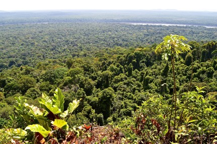jungle near Iwokrama, view from Turtle Mountain, with glimpse of the River Essequibo, Guyana