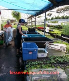 Nos plantes oxygénantes sont préparées quotidiennement