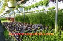 Serres Aquafolia avril 2010 005