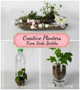 Unique Planters from Soda Bottles