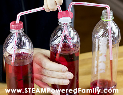 Build a Heart Model from Soda Bottles and Straws
