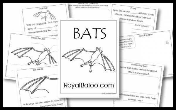Study Pages for Learning about Bats
