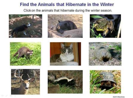hibernation interactive game