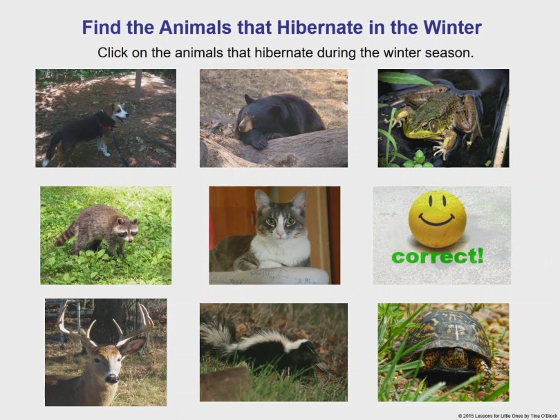 interactive hibernation game