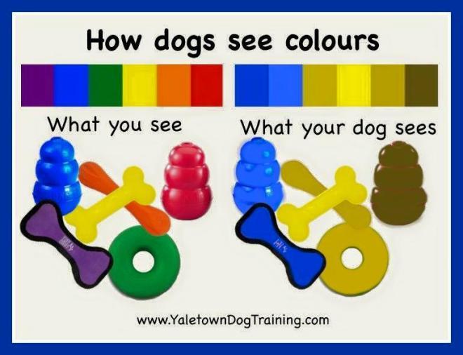 dogcolors