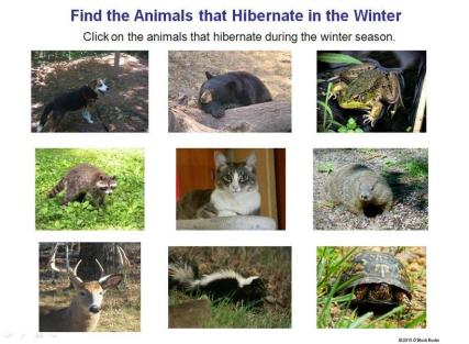 animals that hibernate in the winter