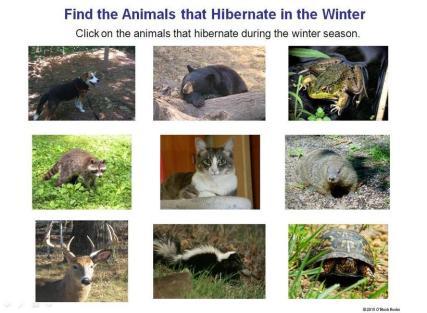 animals that hibernate in the winter