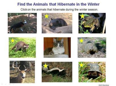 hibernating animals in winter