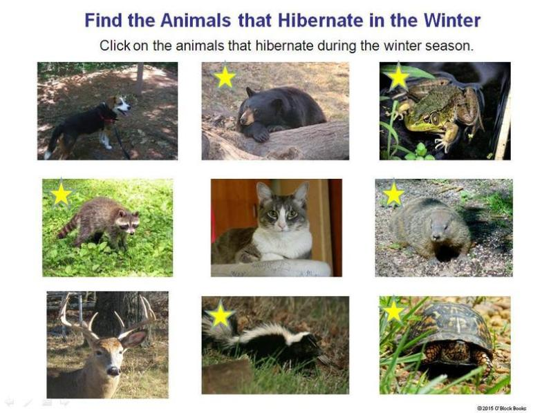 hibernating animals in winter