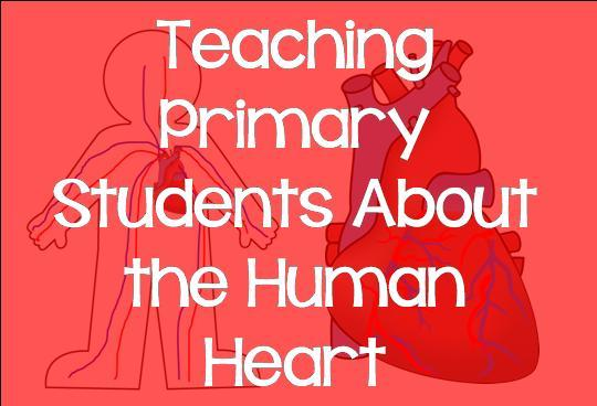 Teaching Primary Students About the Human Heart