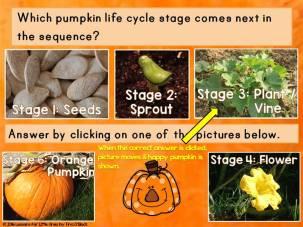 Pumpkin Life Cycle PowerPoint & Interactive Quiz