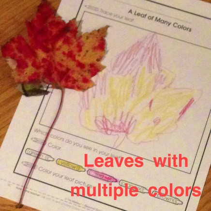 fall leaves with multiple colors activity