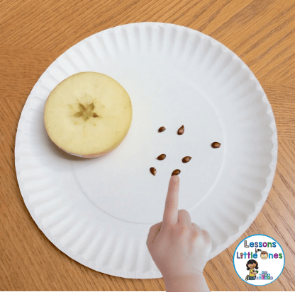apple science experiment counting apple seeds