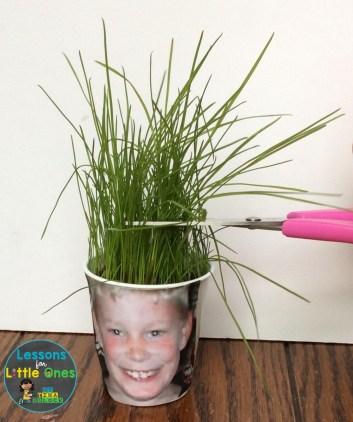 grass growing activity