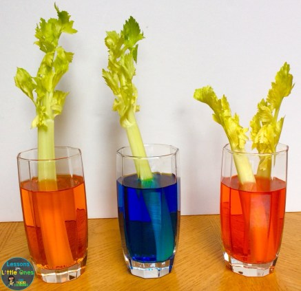 celery and food coloring experiment