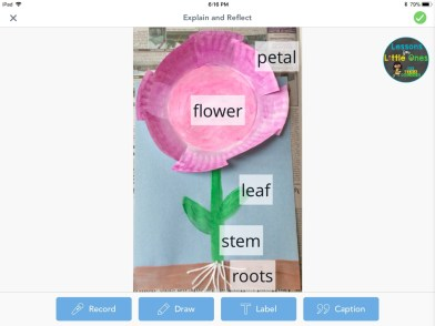 parts of a flower craftivity labeling with Seesaw app