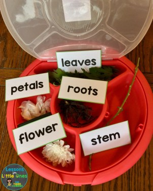 parts of a flower activity - flower dissection