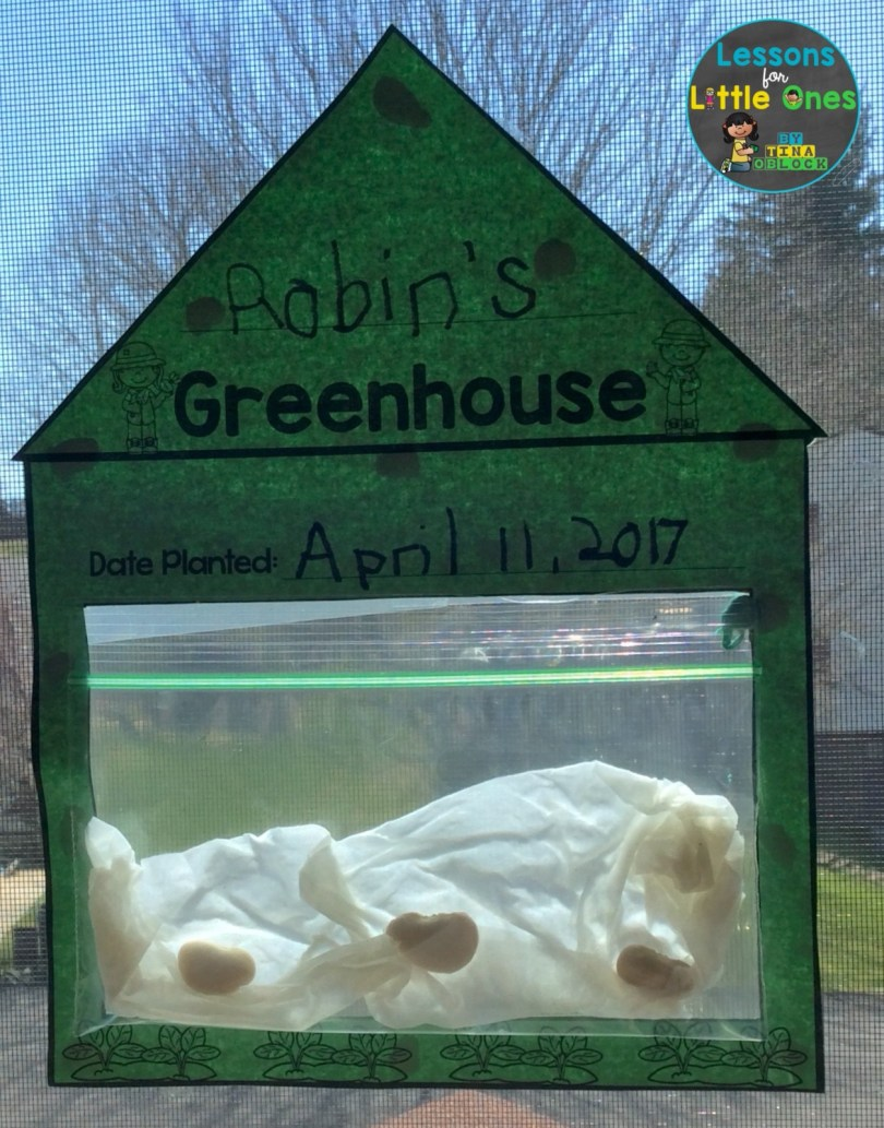 bean sprout greenhouse science experiment