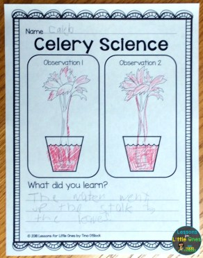 celery science experiment page
