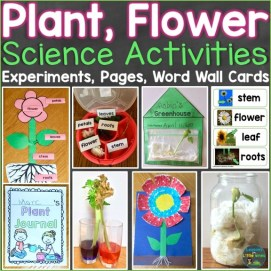 Plants & Flowers Science Activities