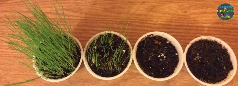 plants science experiment results