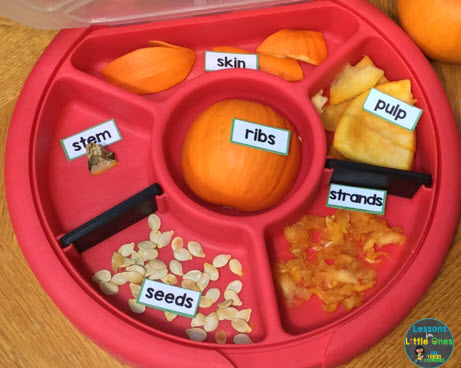 parts of a pumpkin labeling activity