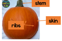 parts of a pumpkin outside