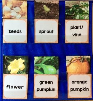 pumpkin life cycle pocket chart cards