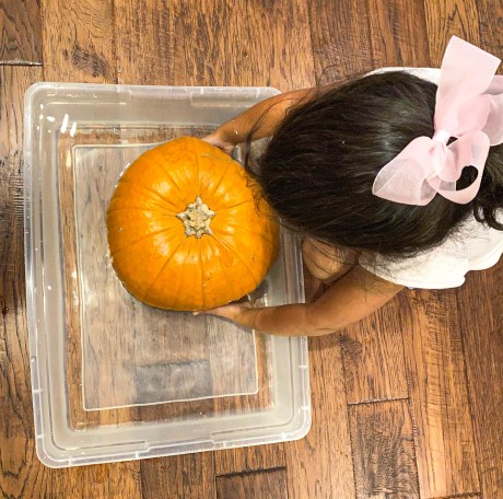 pumpkin sink or float science experiment