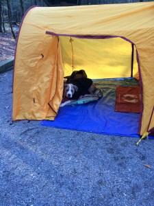 NOT a happy camper!