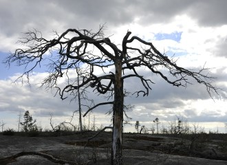 sudden divorce bigamy