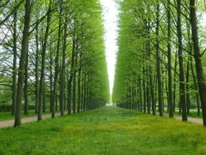 trees-340950_1280