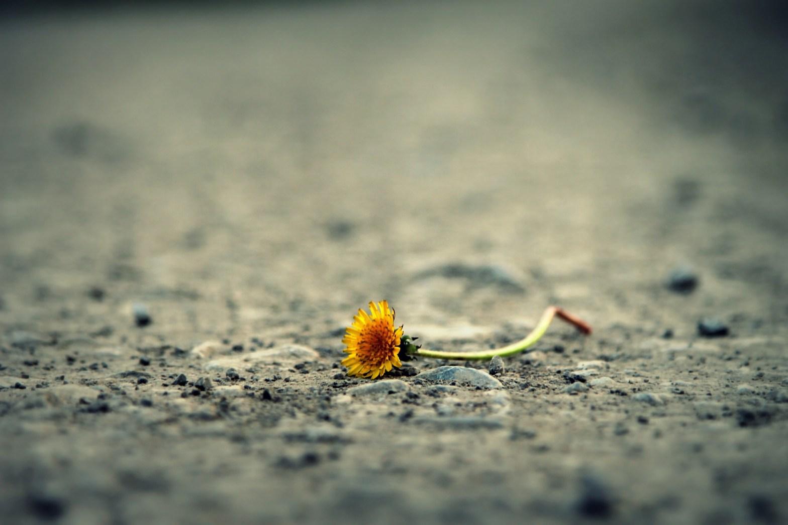 loneliest