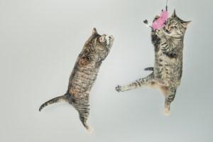 cats-558077_1920