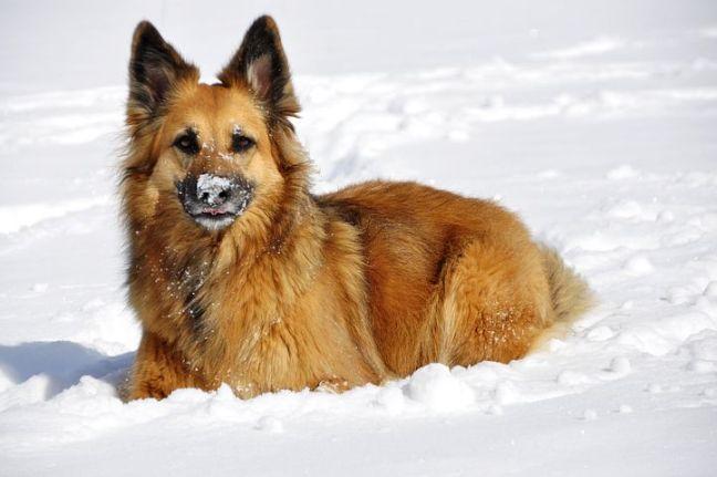 dog-94167__480