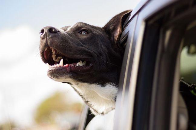 dog-1149964__480 (1)