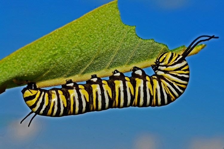 caterpillar-562104_1920