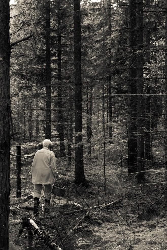 Lillemor i skogen