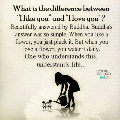 Lessons Learned in LifeThe difference between like and ...