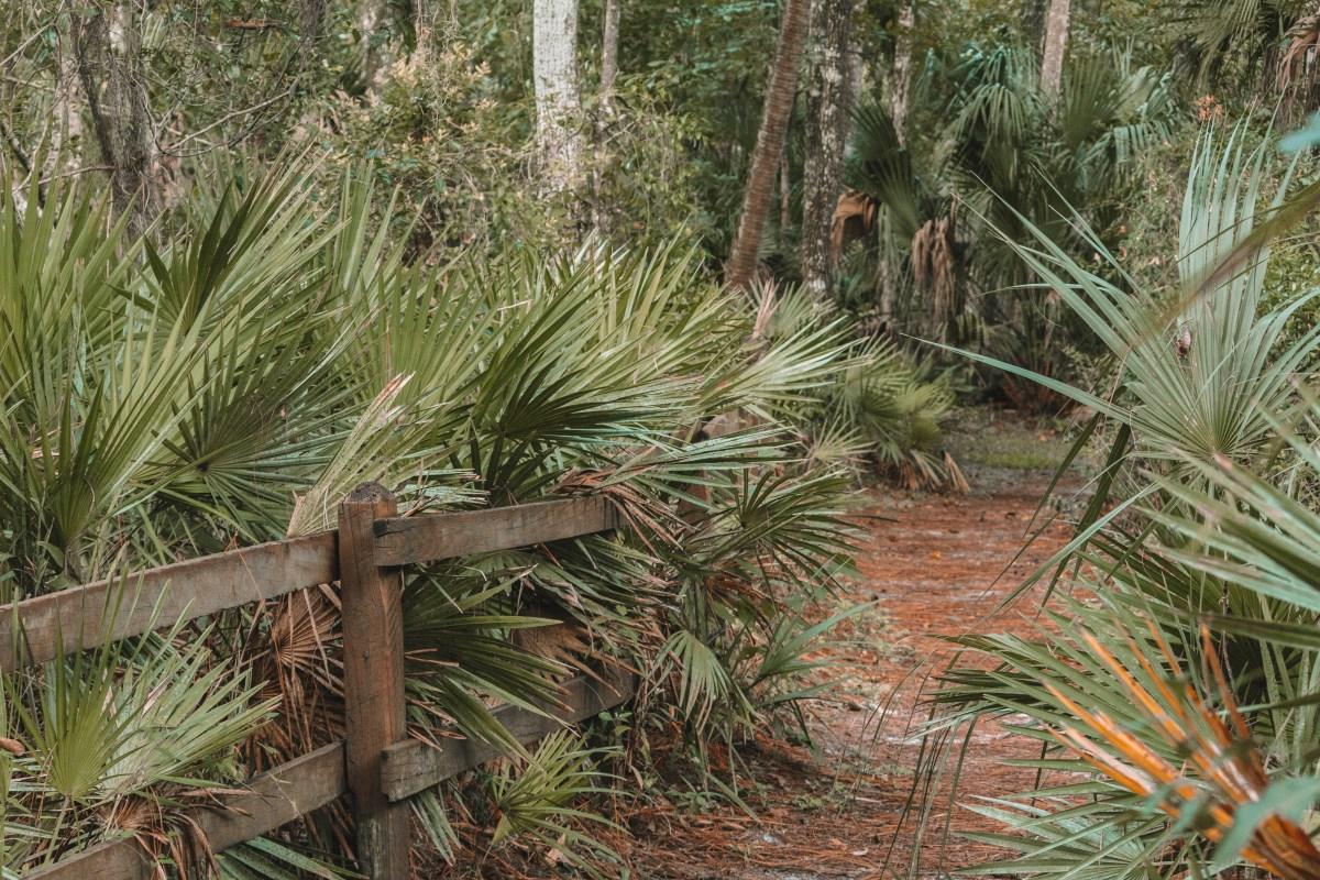 Hillsborough State Park, FL